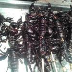 Fried black scorpions
